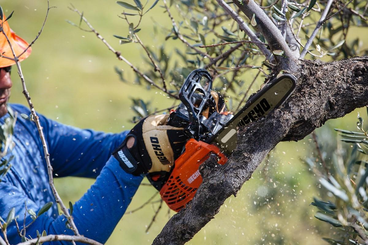 Junge Obstbaume Richtig Schneiden